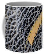 Mesquite Leaves Coffee Mug