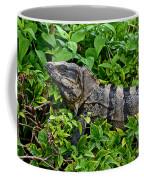 Mexican Spinytailed Iguana  Coffee Mug