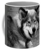 Miley The Husky With Blue And Brown Eyes - Black And White Coffee Mug by Doc Braham