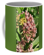 Milkweed Flowers In Bud Coffee Mug