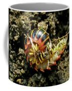 Millipede Polydesmida - Sigmoria Aberrans Coffee Mug