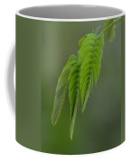 Mimosa Fronds In Spring Coffee Mug