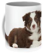 Miniature American Shepherd Puppies Coffee Mug