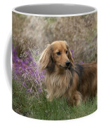 Miniature Long-haired Dachshund Coffee Mug