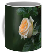 Miniature Rose In The Rain Coffee Mug