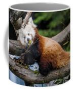 Mohu Eats Bamboo Coffee Mug
