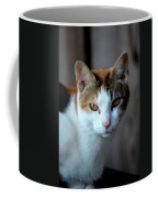 Momma Cat Coffee Mug