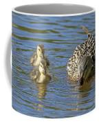 Momma Mallard And Her Ducklings Coffee Mug