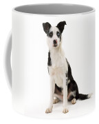 Mongrel Dog, Border Collie Cross Coffee Mug