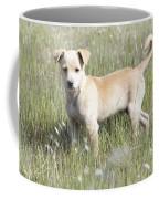 Mongrel Dog Puppy Coffee Mug