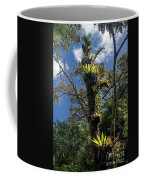 Montagne D'ambre National Park Madagascar 4 Coffee Mug