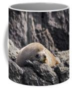 Montague Island Seal Coffee Mug