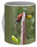 Montezuma Orependola Coffee Mug