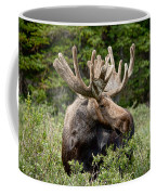 Moose Be Too Cool Coffee Mug