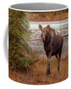Moose Calf Coffee Mug