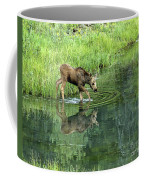 Moose Calf Testing The Water Coffee Mug