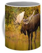 Moose In Glacial Kettle Pond  Coffee Mug