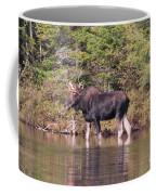 Moose_0591b Coffee Mug