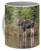 Moose_0596 Coffee Mug