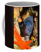 Moray And Starfish Coffee Mug