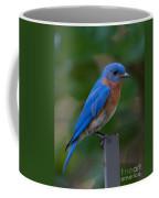 Morning Perch Coffee Mug