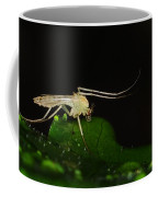 Mosquito Coffee Mug by Paul Ward