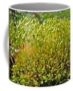 Moss And Fruiting Bodies - Green Lane Pa Coffee Mug