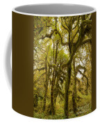 Moss-covered Maple Grove Coffee Mug