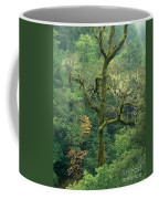 Moss Covered Tree Central California Coffee Mug
