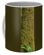 Moss Covered Tree Olympic National Park Coffee Mug
