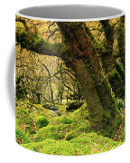 Moss Covered Trees In A Forest Coffee Mug