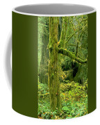 Moss Draped Big Leaf Maple California Coffee Mug