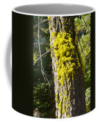 Moss On Tree Along Sentinel Dome Trail In Yosemite Np-ca Coffee Mug