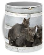 Cat And Kittens Coffee Mug