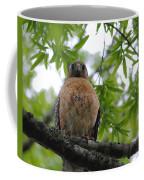 Mother Red Shouldered Hawk Coffee Mug