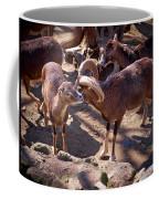 Mouflon Coffee Mug