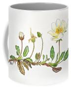 Mountain Avens Coffee Mug