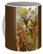 Mountain Beech Rain Forest In Fjordland Np Nz Coffee Mug