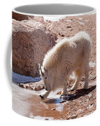 Mountain Goat Breaking Ice On Mount Evans Coffee Mug