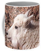 Mountain Goat Kid Portrait On Mount Evans Coffee Mug