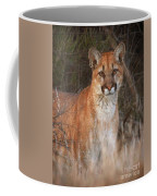 Mountain Lion Coffee Mug by Beth Sargent