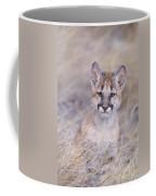 Mountain Lion Cub In Dry Grass Coffee Mug