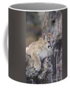 Mountain Lion Cub On Tree Branch Coffee Mug