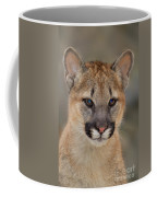 Mountain Lion Felis Concolor Captive Wildlife Rescue Coffee Mug