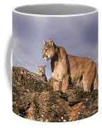 Mountain Lions Felis Concolor Coffee Mug