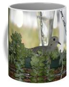 Mourning Dove Nesting Coffee Mug