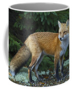 Mr. Fairy Tale.. Coffee Mug