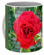 Mr Lincoln Rose Coffee Mug