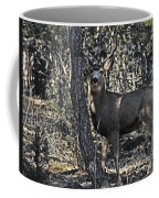 Mule Deer Buck Coffee Mug