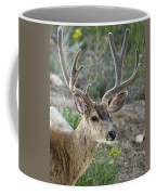 Mule Deer Buck In Velvet Coffee Mug